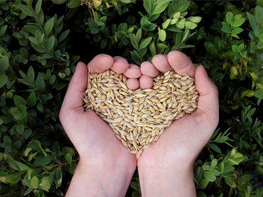coeur céréales